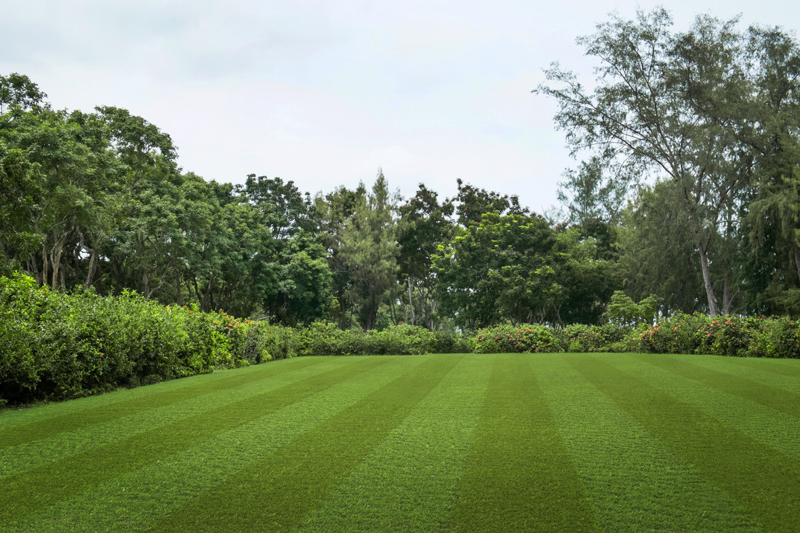 Pro Lawn Multi Lane Lux
