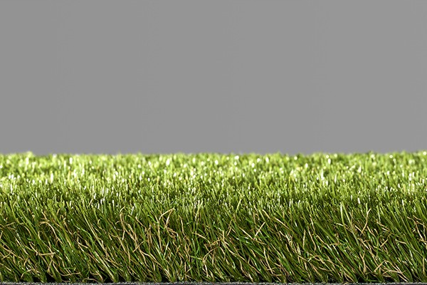 Easy Lawn Poppy
