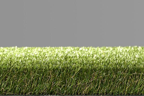 Easy Lawn Daisy