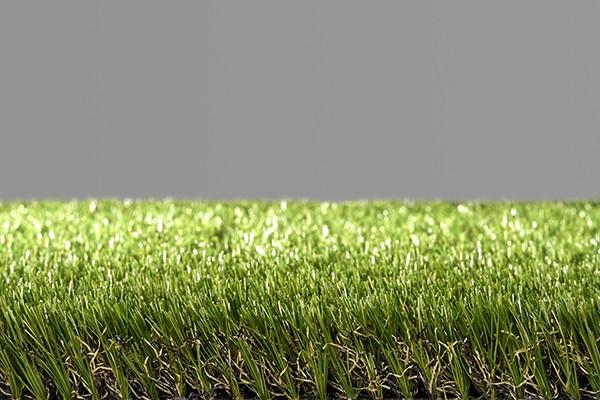 Easy Lawn Violet