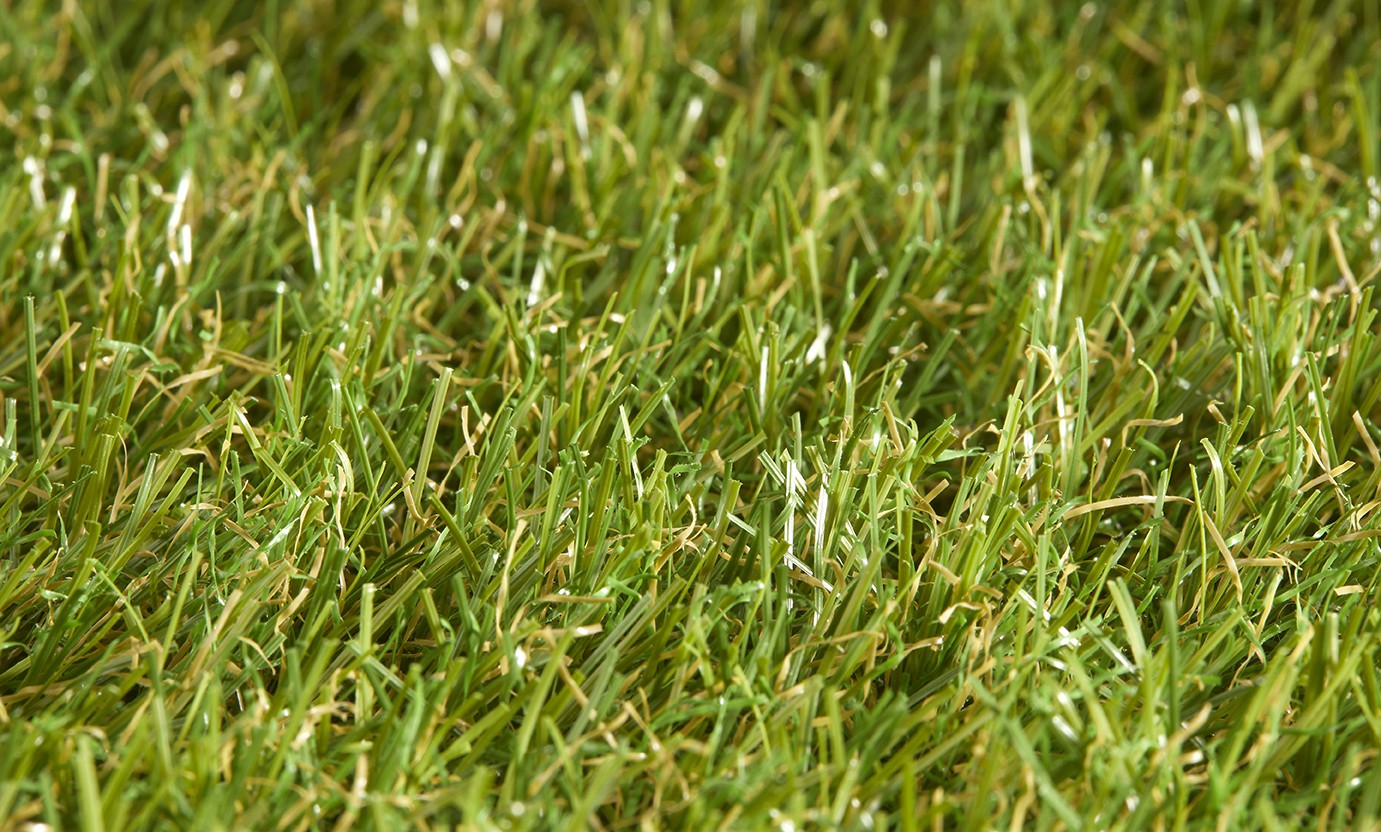 Star Lawn Iris