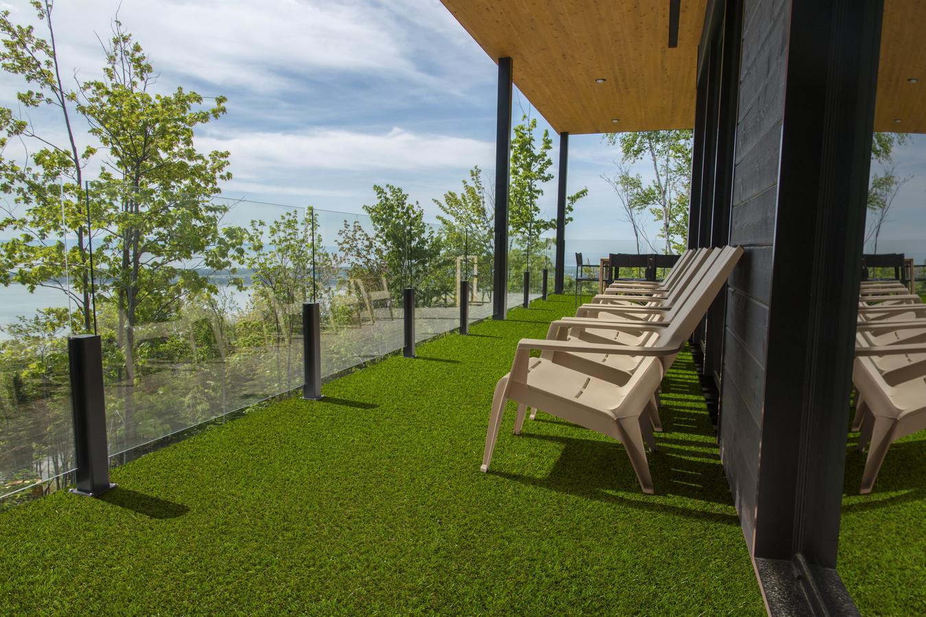 Easy Lawn Verbena